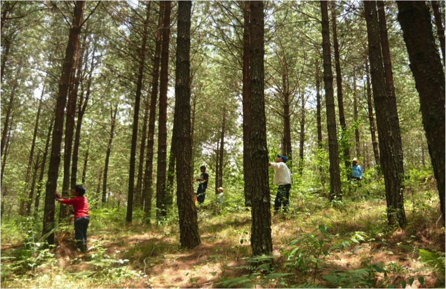 Gesti n del bosque pixquiac for Manejo de viveros forestales